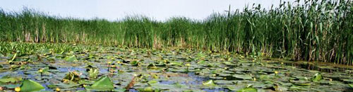 Attractions - Danube Delta